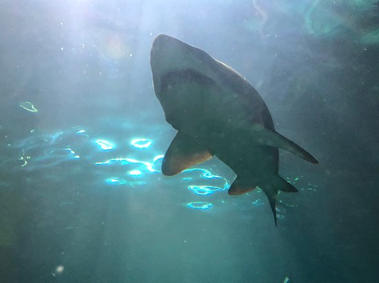 Ripley's Aquarium of the Smokies: Under the shark tank.