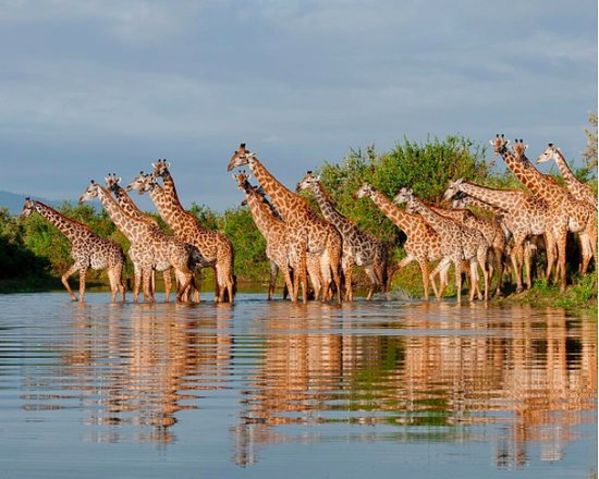 Selek Tours & Safaris
