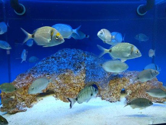 Lixouri, Greece: Διάφορα ψάρια του Ιονίου πελάγους