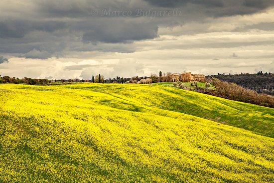 Torrita di Siena, Italie : Val D'Orcia