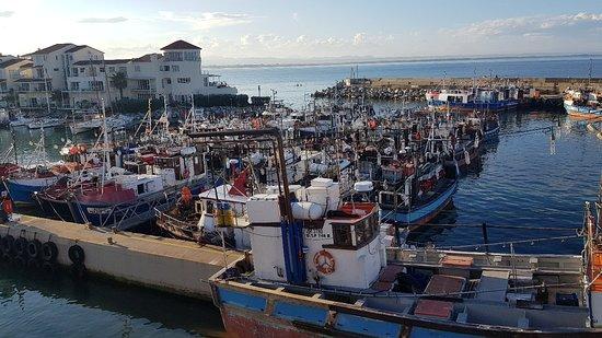 Port St Francis, แอฟริกาใต้: Chokka Block