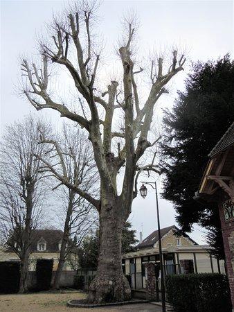 Grand arbre sur le côté droit du château