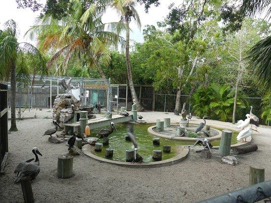 Peace River Wildlife Center: bird yard