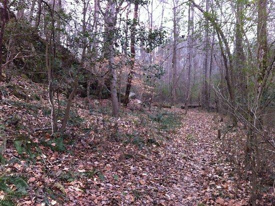 Bear Creek Trail System
