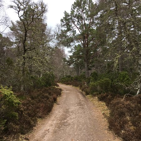 Rothiemurchus Camp and Caravan: Trails right on your doorstep.