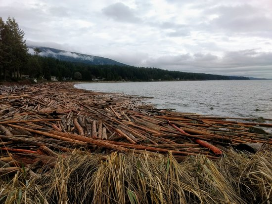 Roberts Creek, Canadá: Huge wash-up of logs from a storm