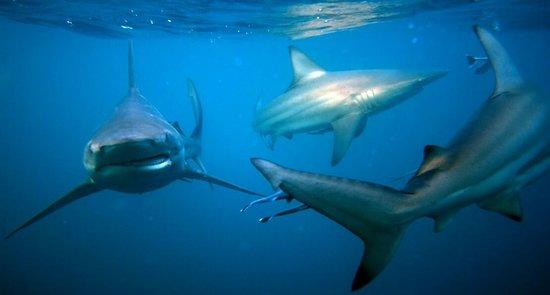 Shark Cage Diving KZN: IMG-20180414-WA0010_large.jpg