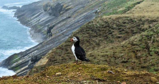 Skomer Island, UK: IMG_20180413_213030_256_large.jpg