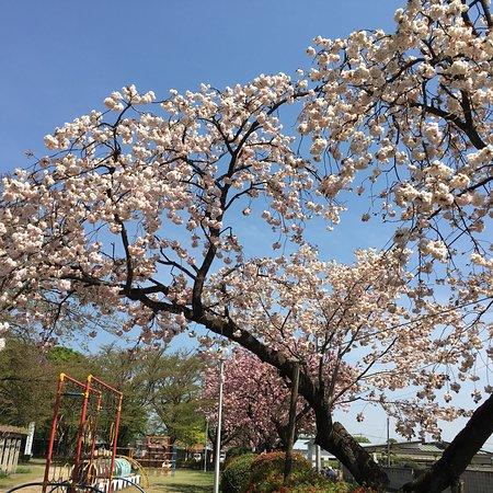 城之内公園, photo3.jpg