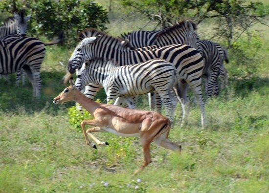 Ulusaba Private Game Reserve 이미지