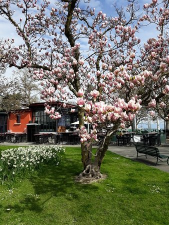 Le jardin anglais geneva 2018 all you need to know for Restaurant le jardin geneve