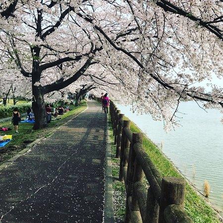 Сузука, Япония: Ishigakiike Park