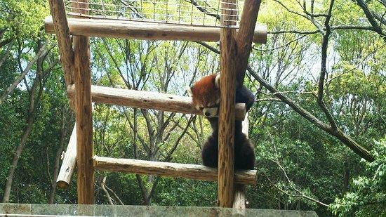 Ikeda Zoo