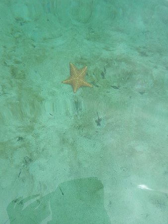 Starfish Beach: 20180411_134357_large.jpg