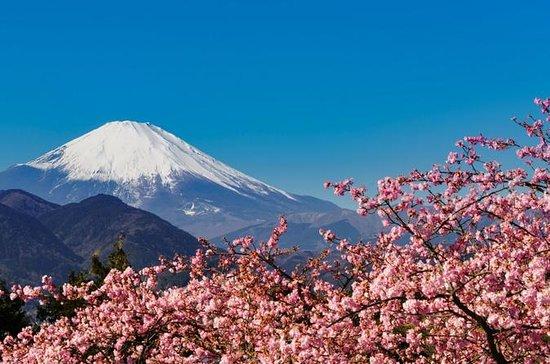 Sakura Cherry Blossom and Hakone Day...