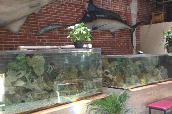 Half-Day Tour of World Aquarium in...