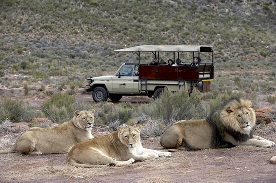 Aquila Game reserve, Full day with...