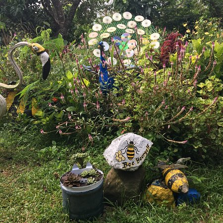 Milea Bee Farm: turn your old CDs to distract birds away from your plants
