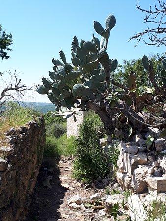 Jish, Israel: Baram - Maronite village ruines