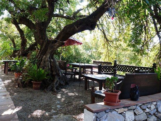 """Hotel Finca el Cerrillo: Top Terrace, """"Under the Carob Tree"""""""
