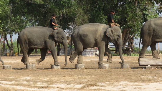Bago, Myanmar: skills they need whn they become timber elephants.