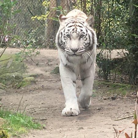 Amersfoort Zoo: photo1.jpg