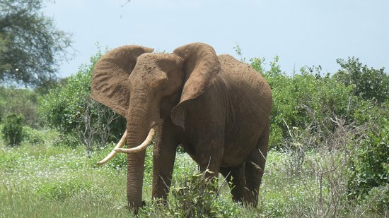 Voi, Kenya: Park