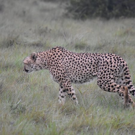 Pumba Private Game Reserve Day Safari: photo7.jpg