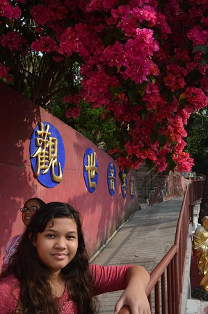Ten Thousand Buddhas Monastery (Man Fat Sze): bougainvilla