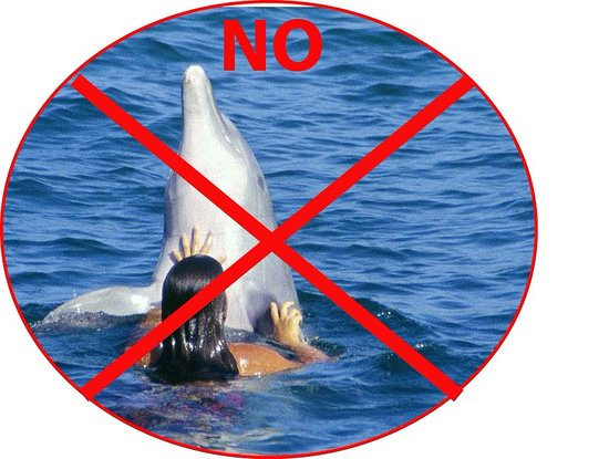 Blahbatuh, Indonesien: NO DOLPHINS HERE!