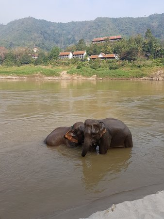 Pakbeng, Laos: Two of the elephants with the hotel in the background