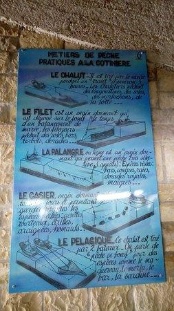 Le Port de la Cotinière : Types de pêches à La Cotinière