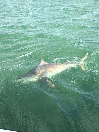 Mile Marker 27 Fishing Charters: Huge Bull Sharks!
