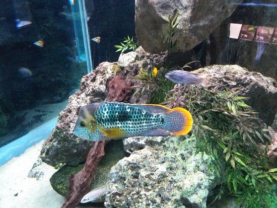 Poisson tropical picture of aquarium et musee de - Poisson shark aquarium ...