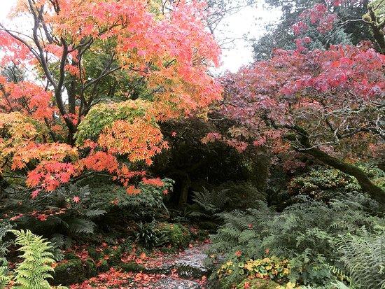 Κένταλ, UK: Sizergh garden