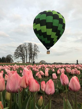 Willamette Valley Balloons