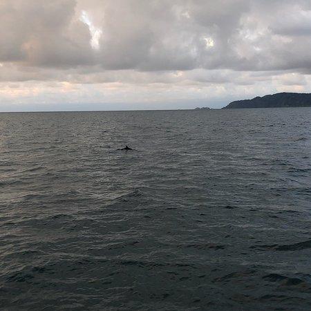 Drake Bay, Kosta Rika: A great trip on a catamaran @Bahia Drake 😍🐬🏝