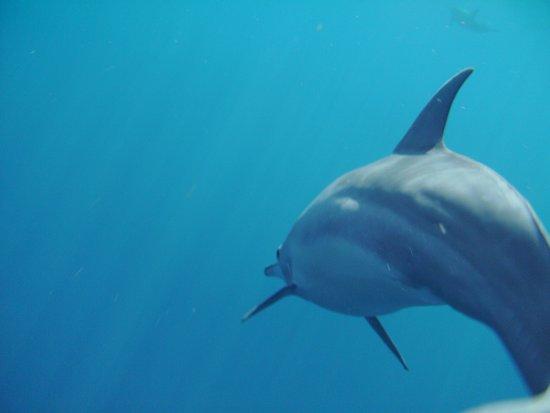 Mathiveri Island : dolphin safari 2