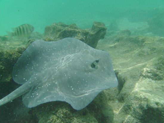 Mathiveri Island : taken in the lagoon