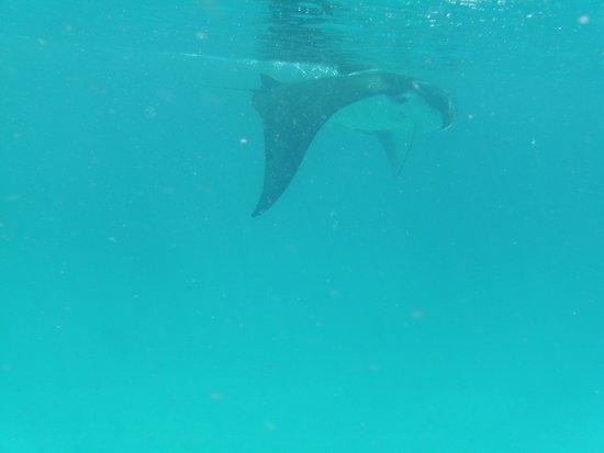 Mathiveri Island : manta safari