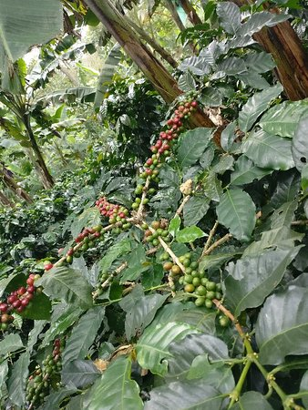 Traditional Coffee Tour With Tasting in Salento Photo