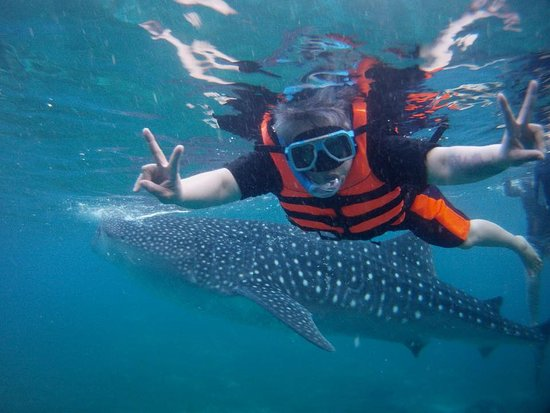 Oslob Whale Sharks: Enjoyed this pose with the whale shark.