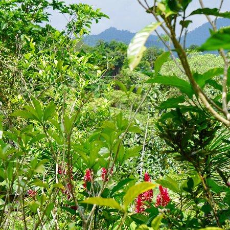 Playa Matapalo, Коста-Рика: photo7.jpg