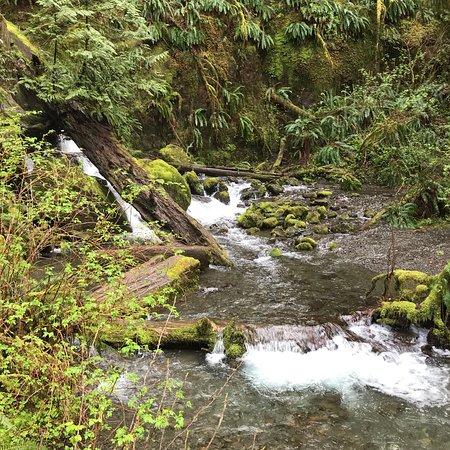 Quinault Rain Forest: photo0.jpg