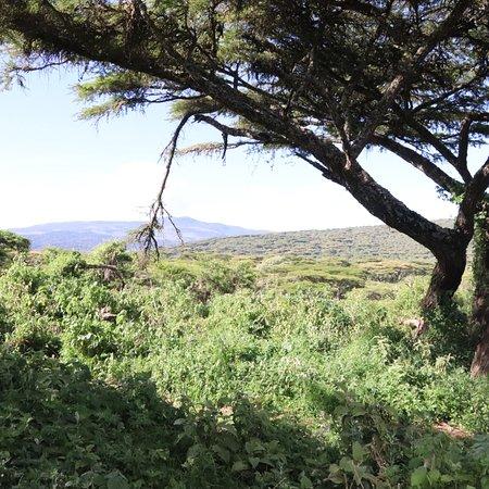 Bilde fra Ang'ata Camp Ngorongoro