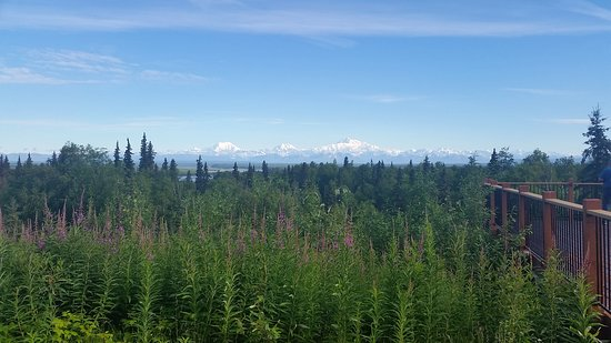 Talkeetna Alaskan Lodge: On a good day this is your view from the observation deck.