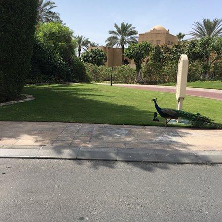 Residence & Spa at One&Only Royal Mirage Dubai: photo5.jpg