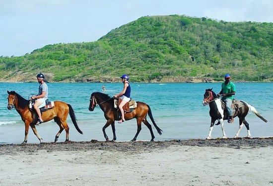 Gros Islet, St. Lucia: Beautiful day with our horses at the beach in St. Lucia