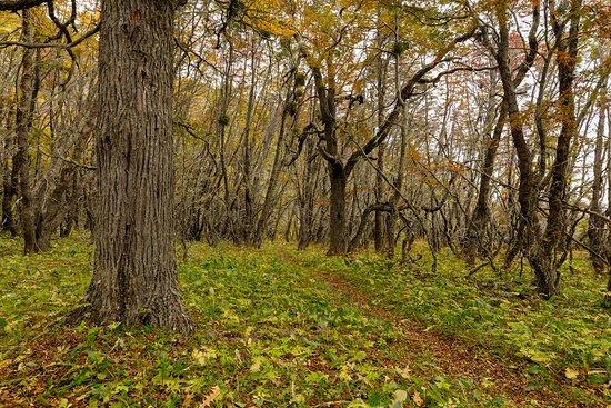 Tierra del Fuego, Şili: Lush forrest trail