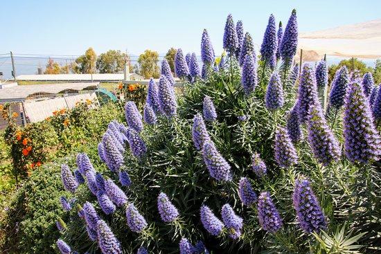 Ramot Naftali, Israel: 2 Vines Winery flower garden